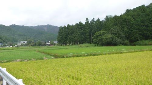 Umedako020